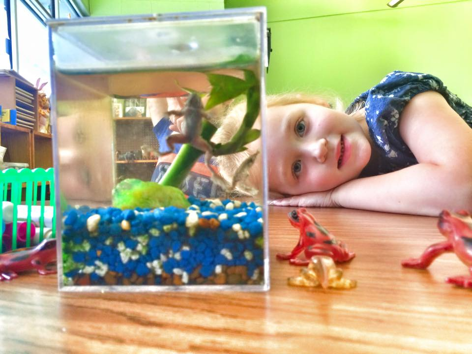VPK student in classroom looking at fish tank
